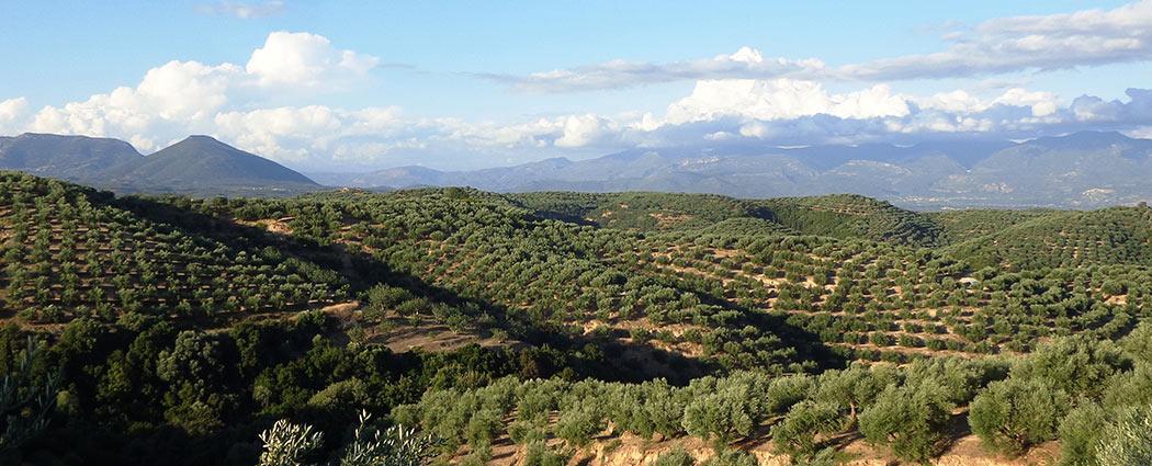 unser-olivenoel